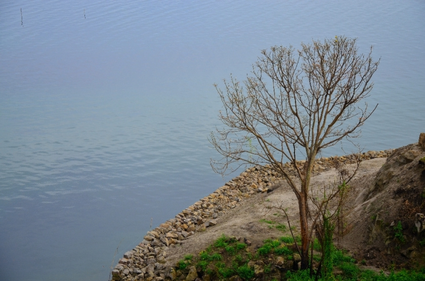 A dry tree in the edge of the lake
