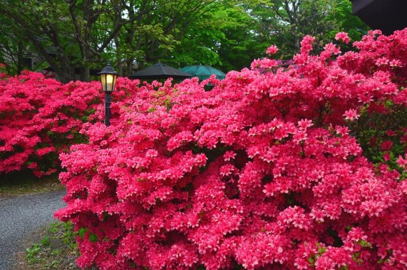Musim semi Karuizawa