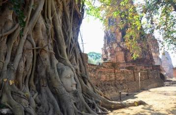 Patung Budha dililit akar pohon